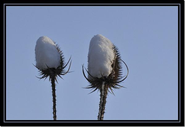 Kaardenbol met sneeuw
