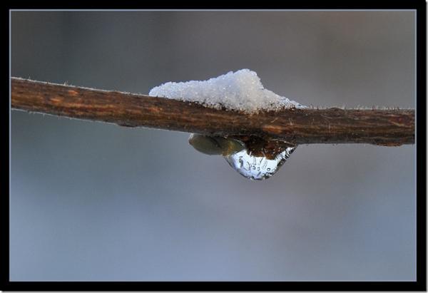 Smeltend sneeuw
