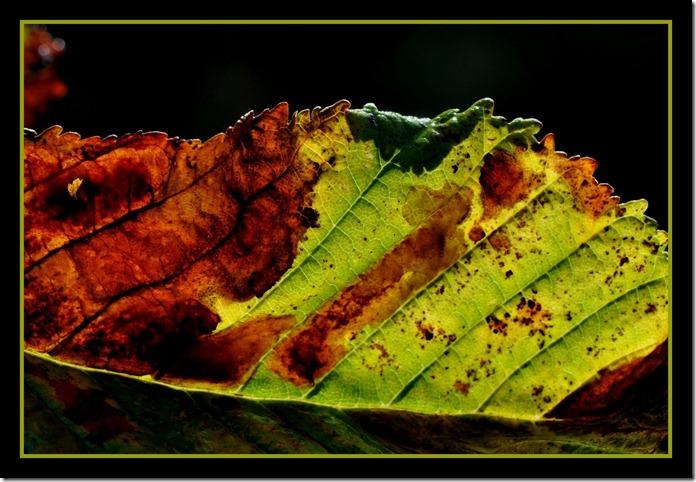 Kastanjeblad met vlekken